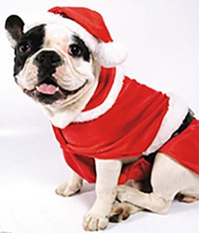 Hundesweater til din hund